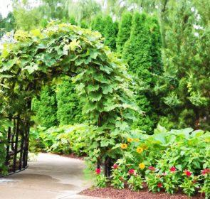Come procedere alla potatura ecco alcuni consigli per il for Manutenzione giardini