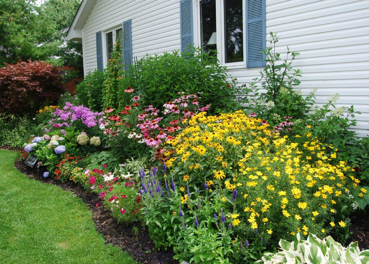 Piante Per Aiuole Perenni la progettazione di aiuole per il tuo giardino: consigli e