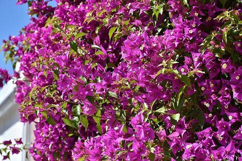 Quali fiori da giardino scegliere e quali sono i prezzi