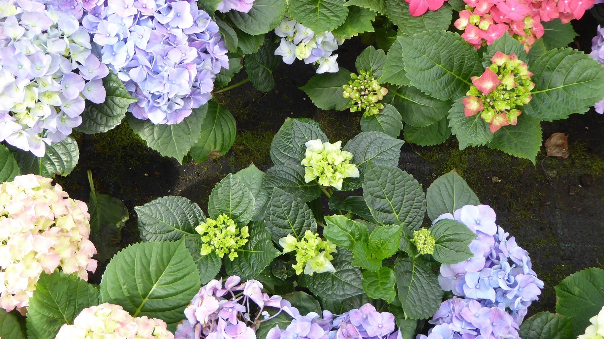 Fiori Perenni Da Balcone quali fiori da giardino scegliere e quali sono i prezzi?