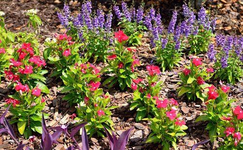 giardini fioriti
