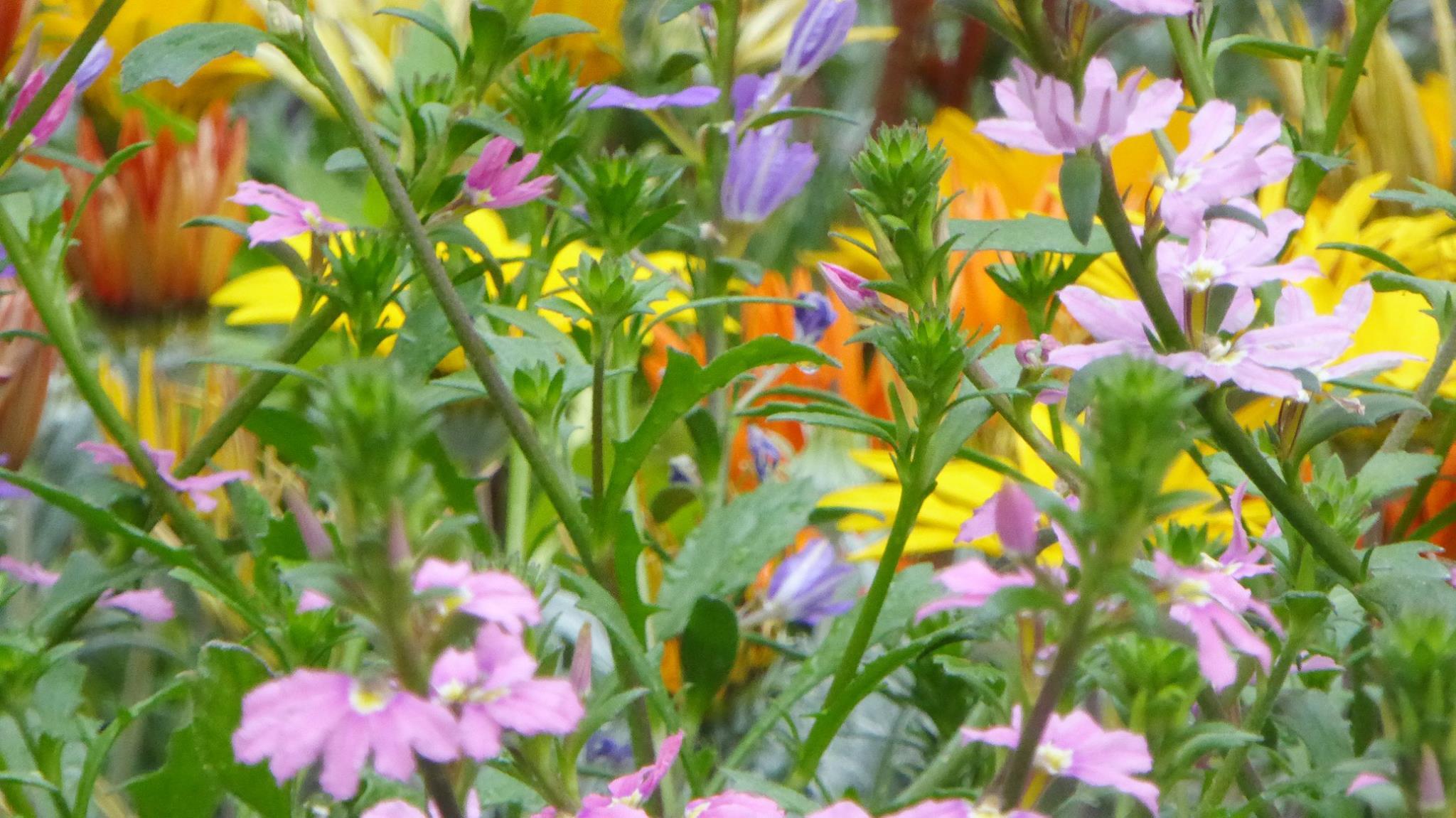 Alberi Ornamentali Da Giardino i consigli degli esperti e i costi medi dei giardini fioriti