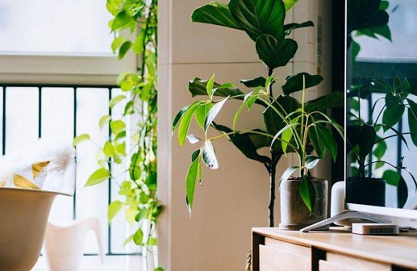 Piante Da Appartamento Utili.Consigli Utili Per Far Crescere Le Piante Da Interno Correttamente