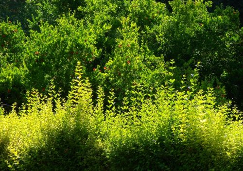 Qual sono le piante perenni sono le pi adatte al tuo for Piante perenni per bordure