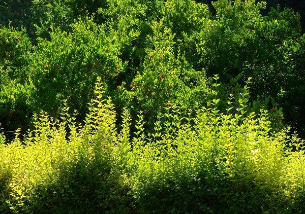 Qual sono le piante perenni sono le pi adatte al tuo for Piante da aiuola perenni