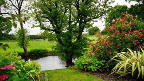 Qual sono le piante perenni sono le pi adatte al tuo - Piante basse perenni da giardino ...