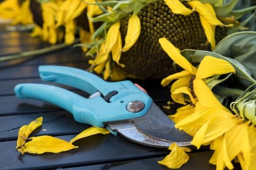 strumenti da giardino